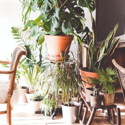Les meilleures plantes pour purifier notre intérieur